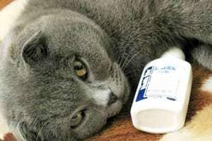 Лечение насморка у кошек