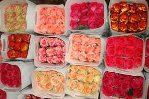Дешевые свежесрезанные цветы по оптовым ценам