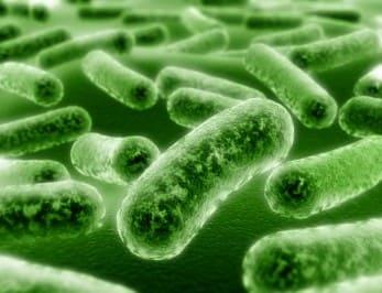 Эффективность использования пробиотиков