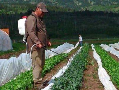 Использование пестицидов в борьбе с вредителем