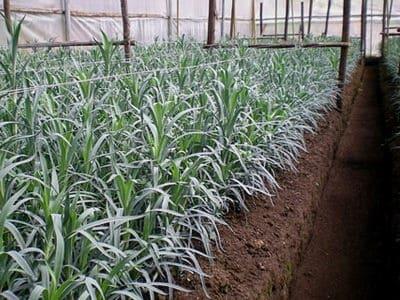 Использование субстратов для выращивания рассады