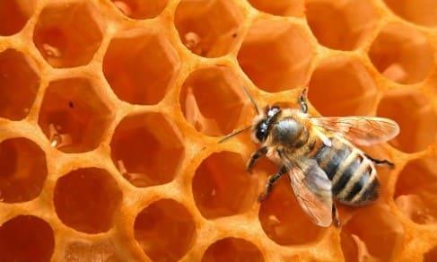 Продукты пчеловодства для простаты