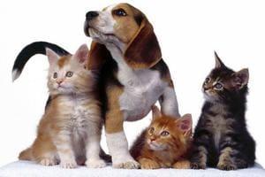 Косметика для животных
