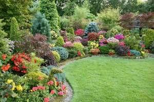 Декоративные кустарники и деревья