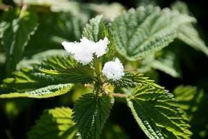 растения для красоты и здоровья