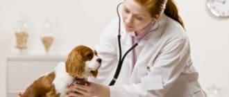 Вызов врача ветеринара на дом
